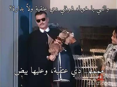 والنبي يا خويا، شوفلي دي عتقية ولّا بدارة؟ - مممم.. دي عتقية، وعليها بيض